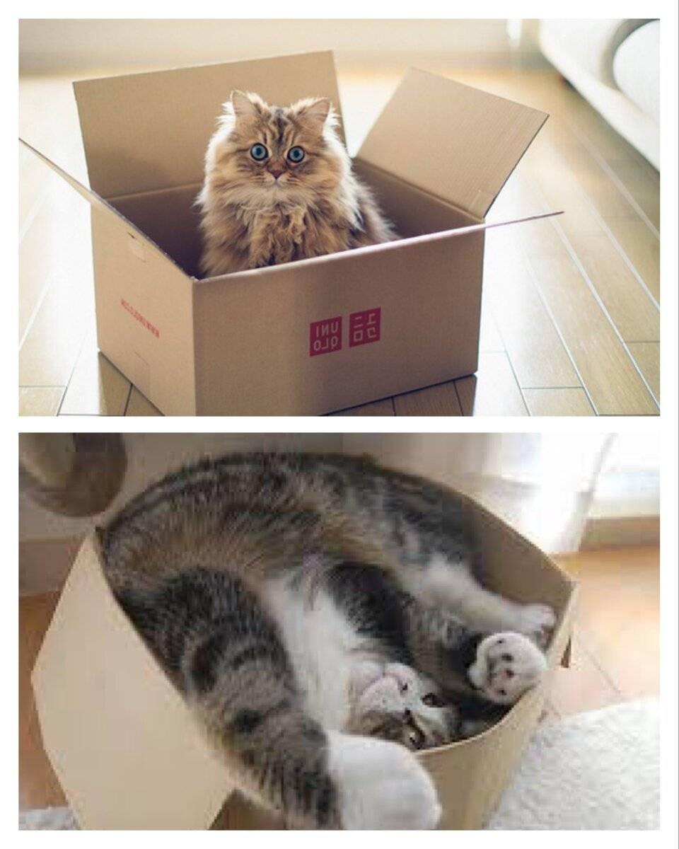 Учёные рассказали, почему коты так сильно любят коробки. ридус