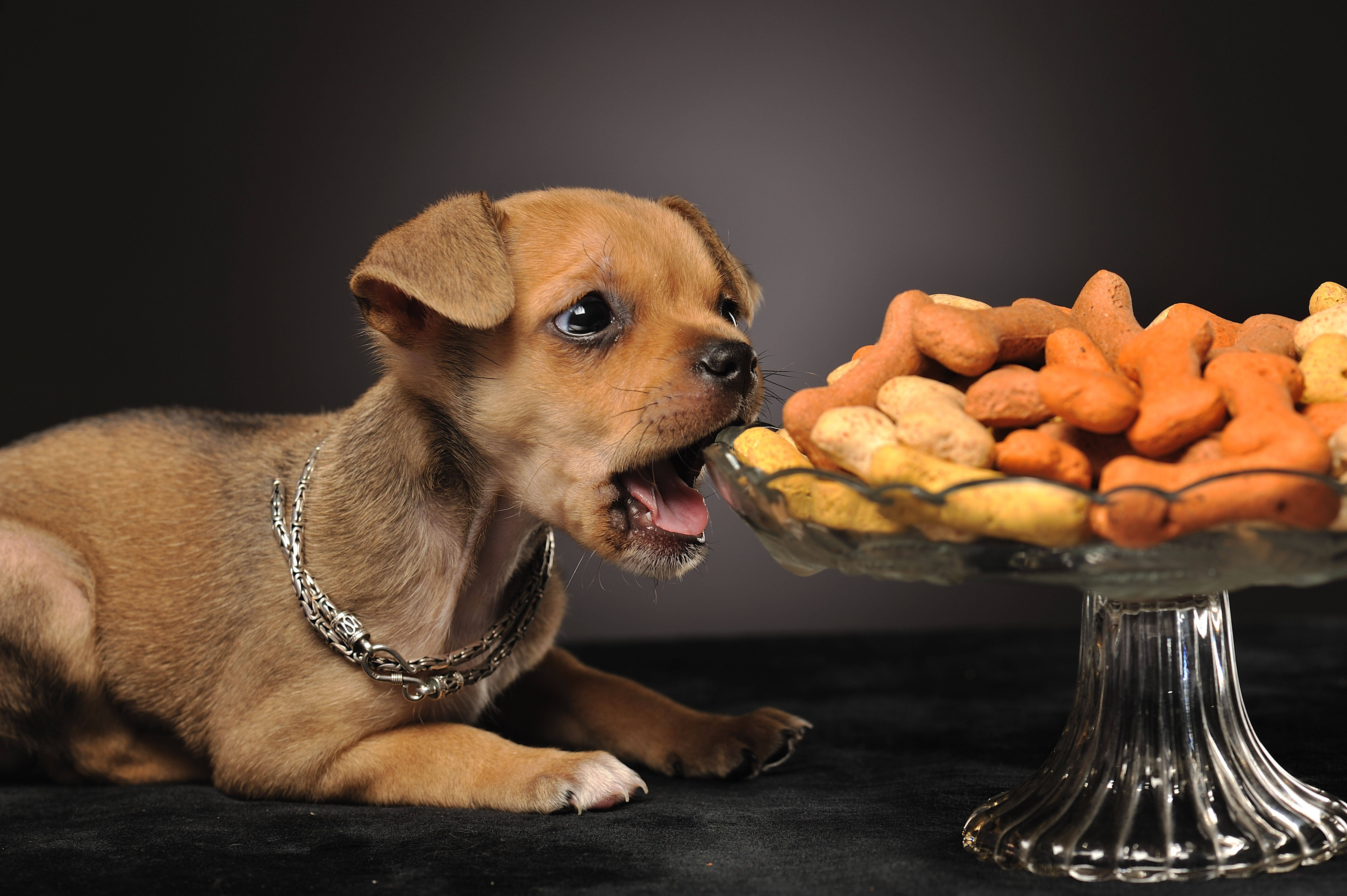 Лакомства и угощение для собак своими руками