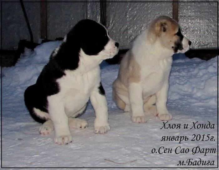 Разнообразие кличек для маленьких собак