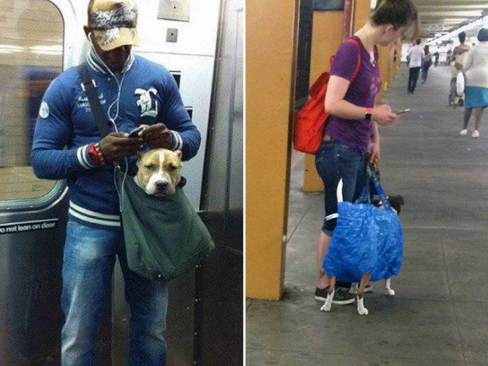 Можно ли с собакой в метро: правила перевозки