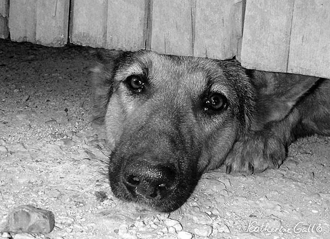 Почему у собаки текут слезы