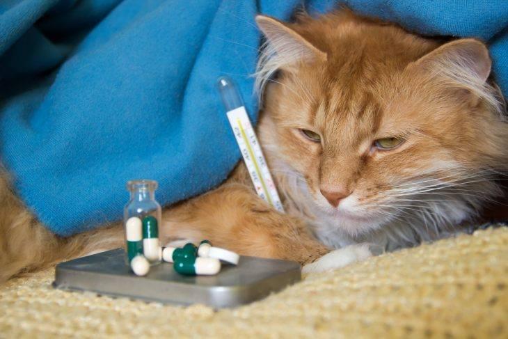 Гиардиоз или лямблиоз у собак и кошек