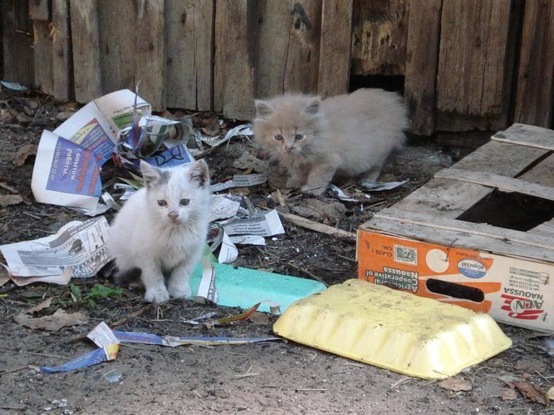 Что делать, если кот съел пакет?