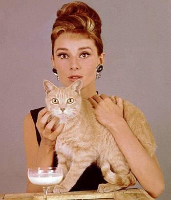 Самые знаменитые коты, которые покорили интернет - zefirka