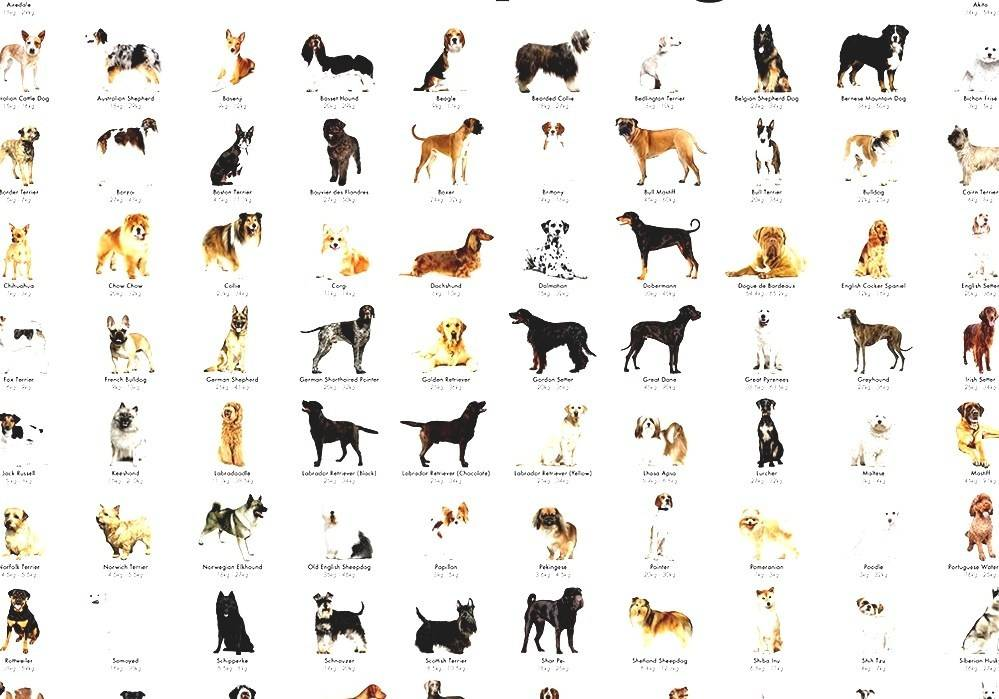 Какую породу собак выбрать: как правильно сделать выбор по характеру