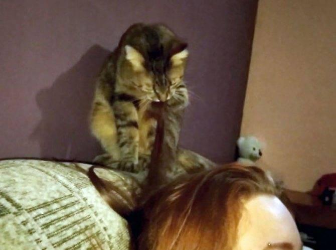 Вылизывание кошки