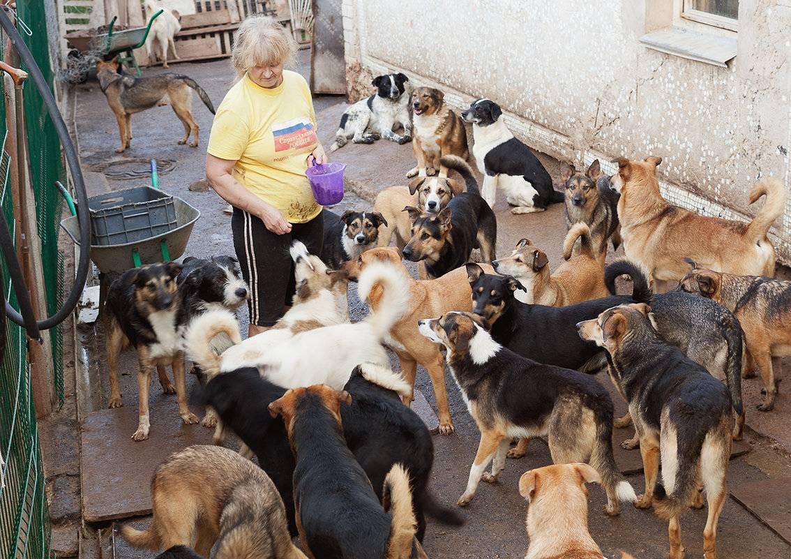 Приюты для бездомных животных в россии