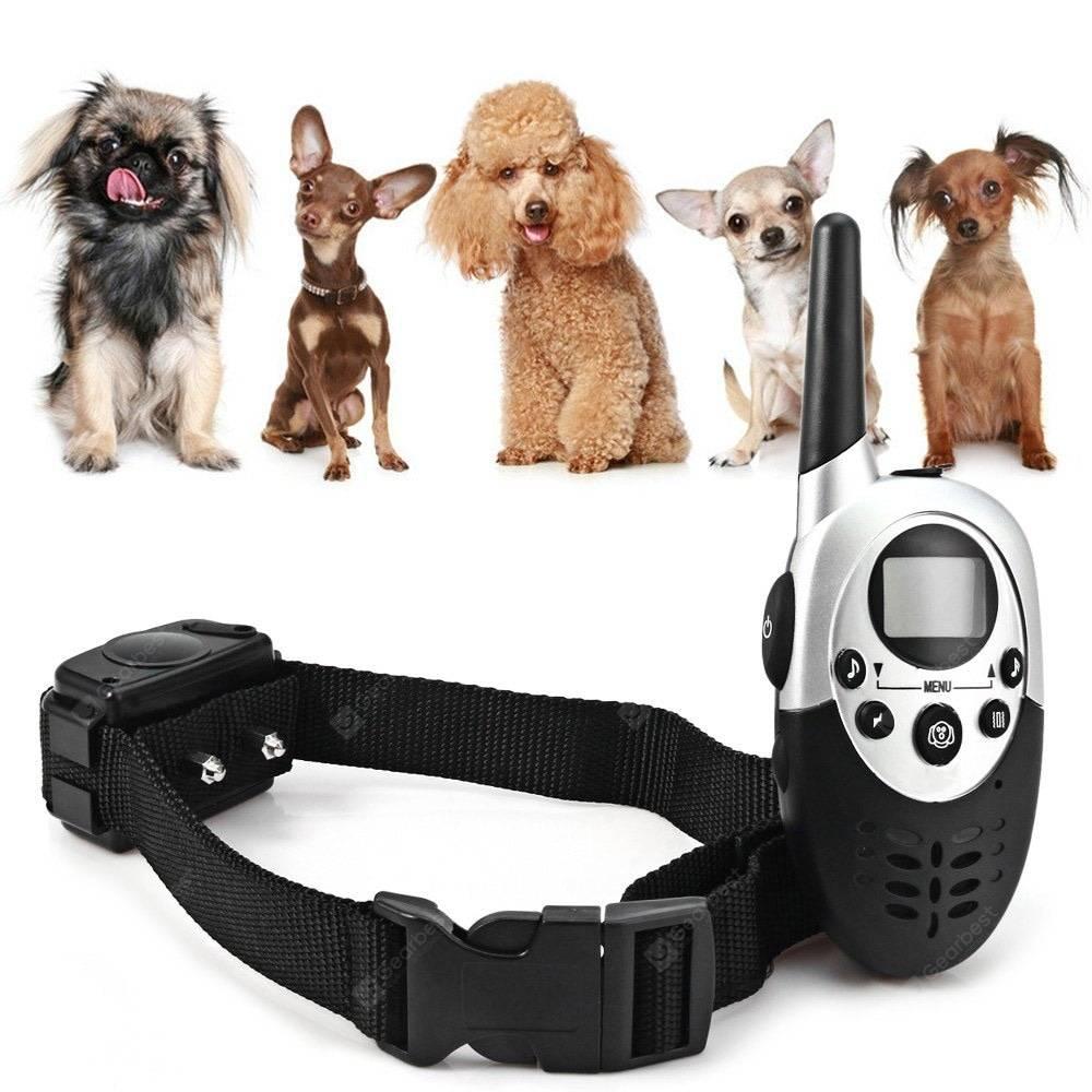 Дрессировка с помощью кликера и электроошейника: советы начинающим собаководам