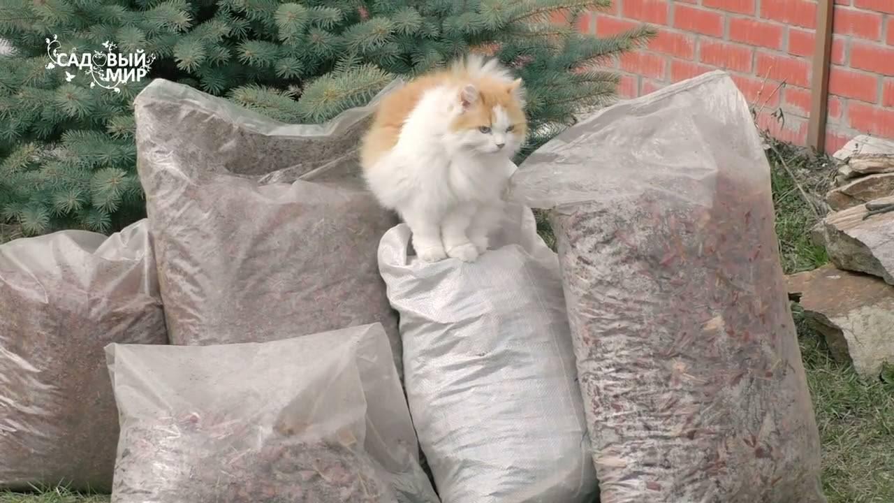 Как вывести блох у кошки в домашних условиях | как избавиться