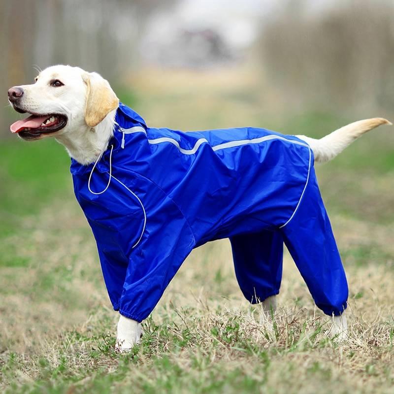 Дождевик для собаки своими руками - необходимые материалы, выкройки, пошаговая инструкция