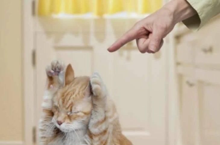 10 способов отучить кошку драть обои и мебель