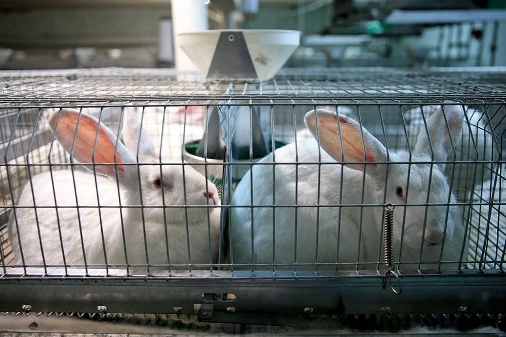 ᐉ мини-ферма для кроликов своими руками: чертежи, размеры, материалы - zooon.ru