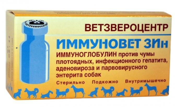Дипентавак для собак: инструкция по применению отечественного препарата