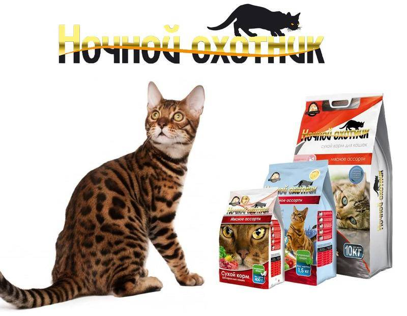 Классы кормов для кошек: сравнение и подробный анализ