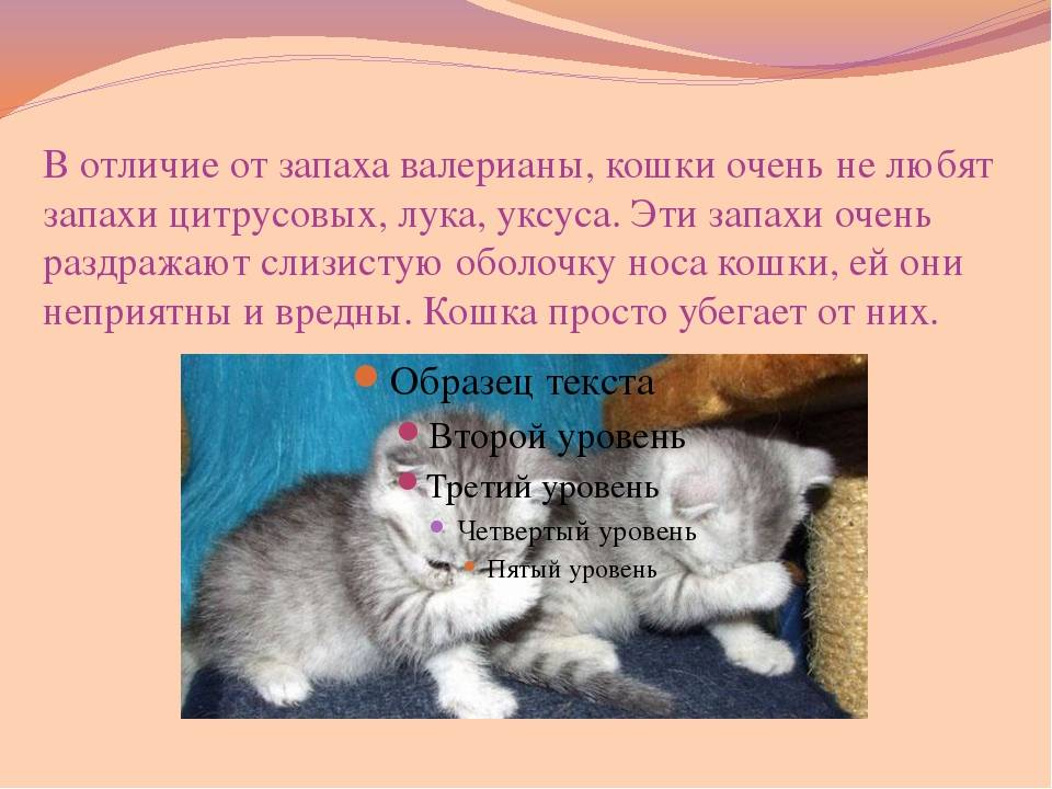 Запах изо рта кошки:  причины и диагностика вони из пасти