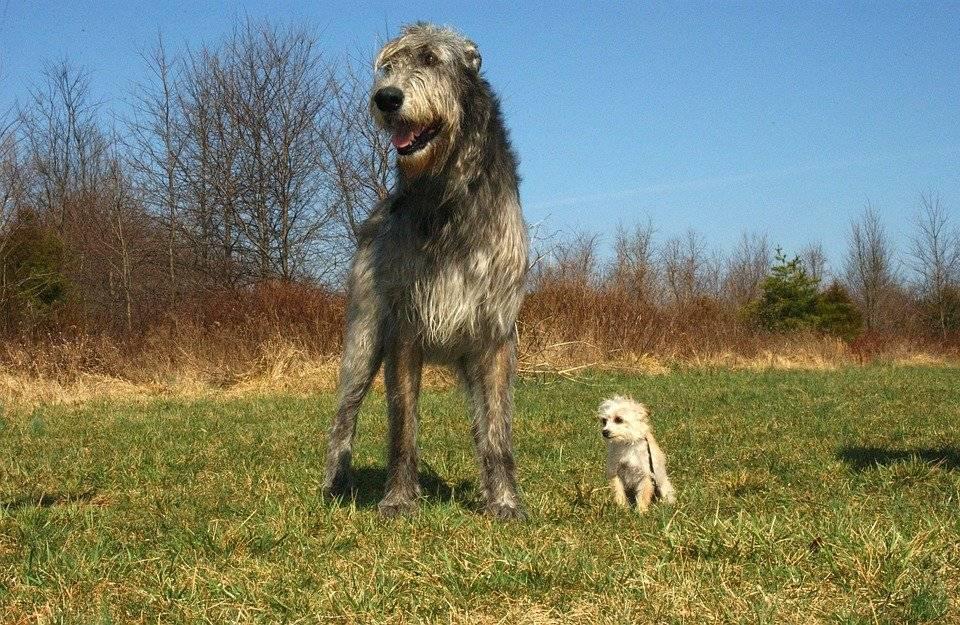 К какому виду относятся собаки разных пород: определение, смешанные породы