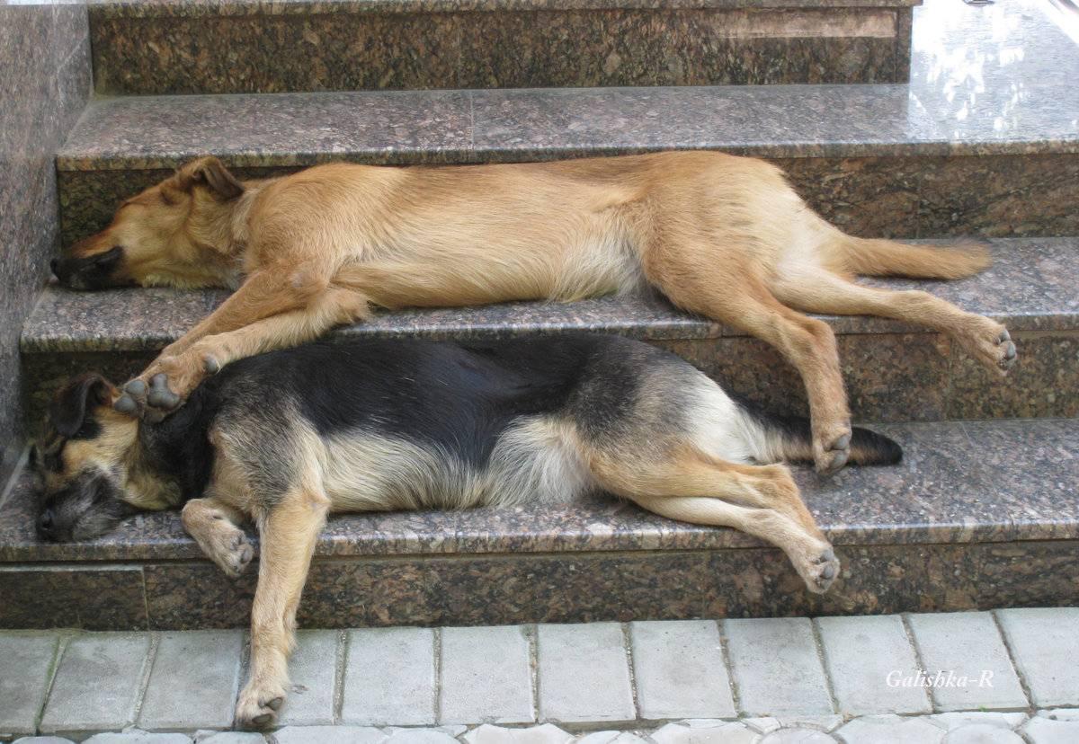 Как помочь собаке в жару, уход за лапами и шерстью, прогулки летом