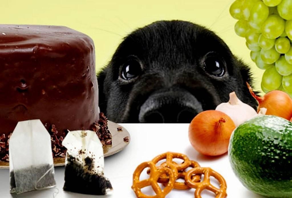 Чем нельзя кормить собаку?