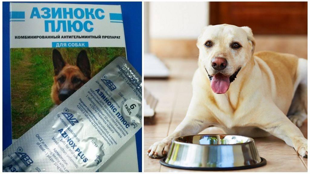 Азинокс плюс (таблетки) для собак | отзывы о применении препаратов для животных от ветеринаров и заводчиков