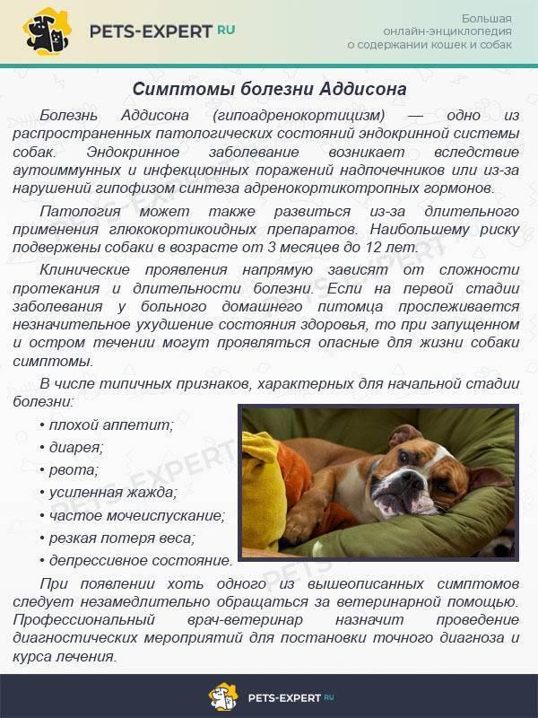 Демодекоз собак