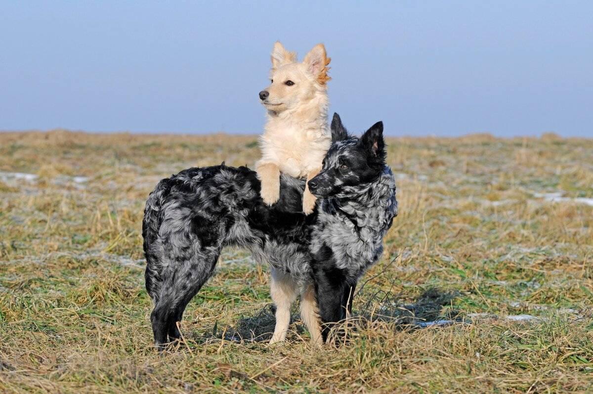 Редкие породы собак — фотографии и названия, описание