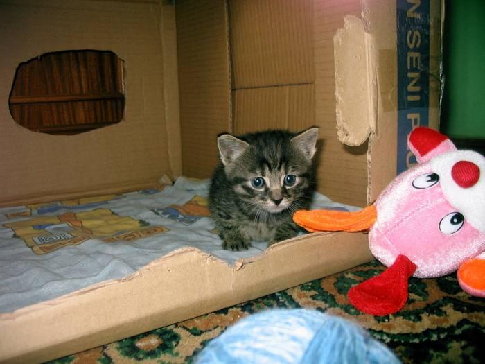 Что делать в первую очередь, когда в доме появляется котенок