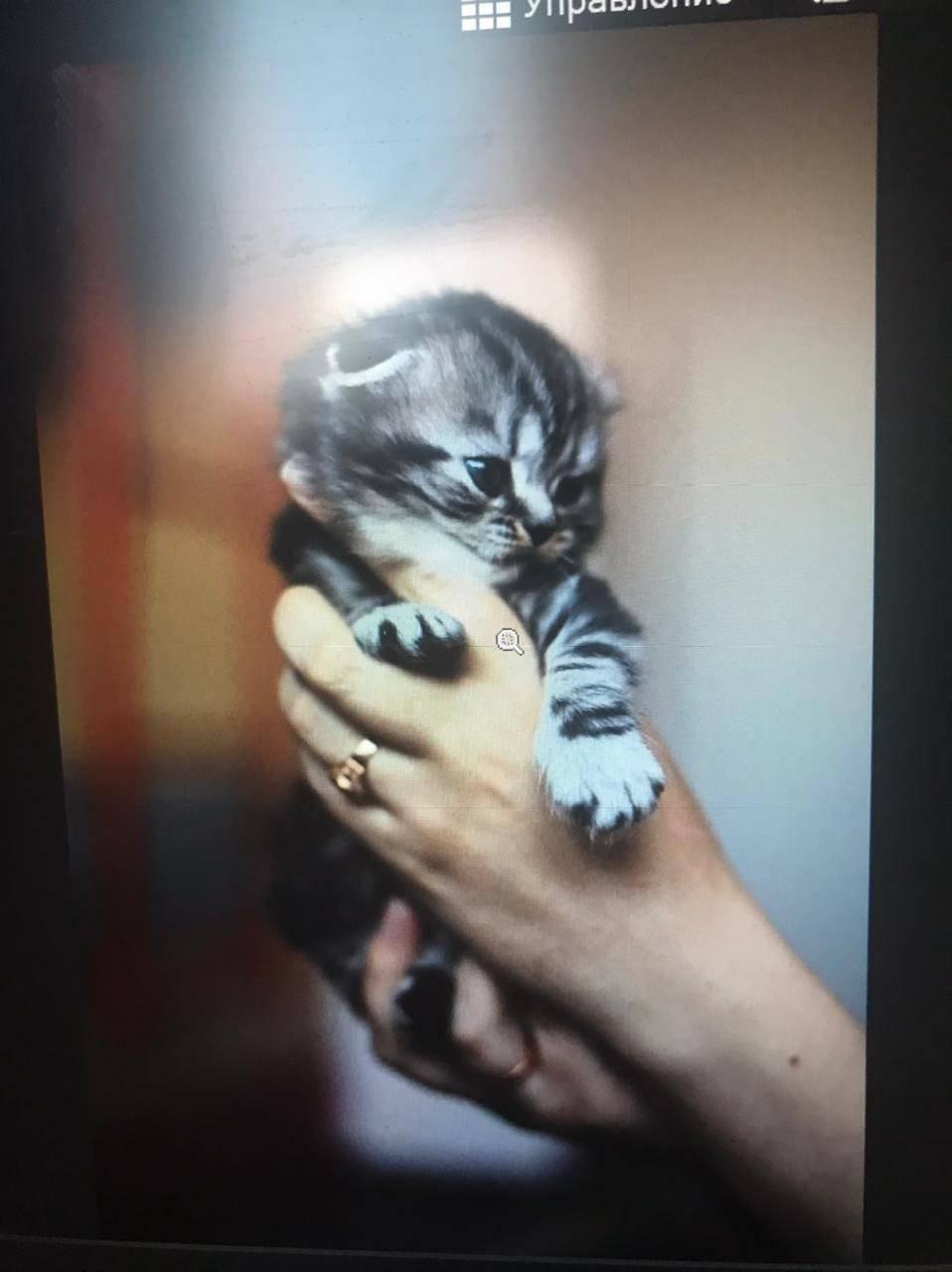 Как определить пол котенка: 120 фото отличительных признаков в первые дни жизни котят