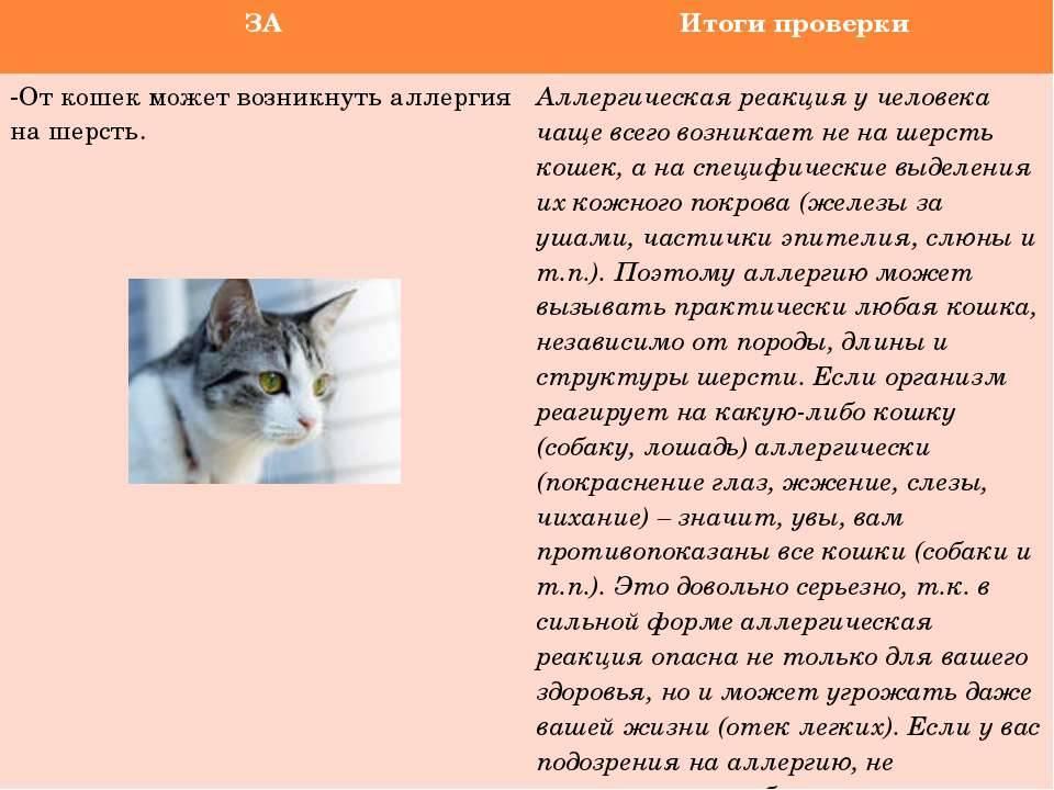 Аллергия на кошку: можно ли справиться или придется выкинуть