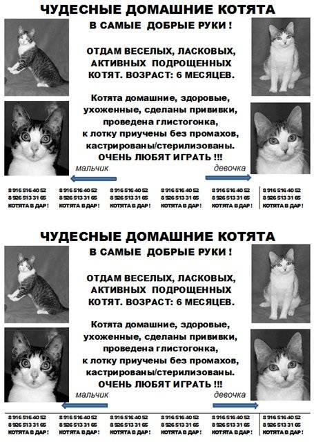 Как определить возраст котенка? - любовь к котам