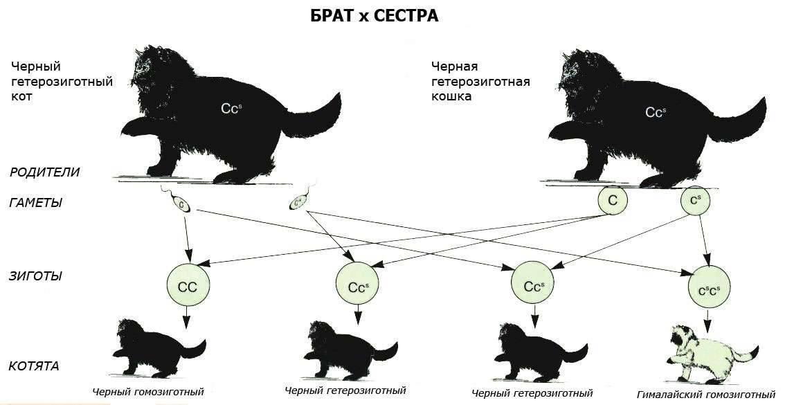 Коты и кошки: фото, различия, характер, поведение, особенности