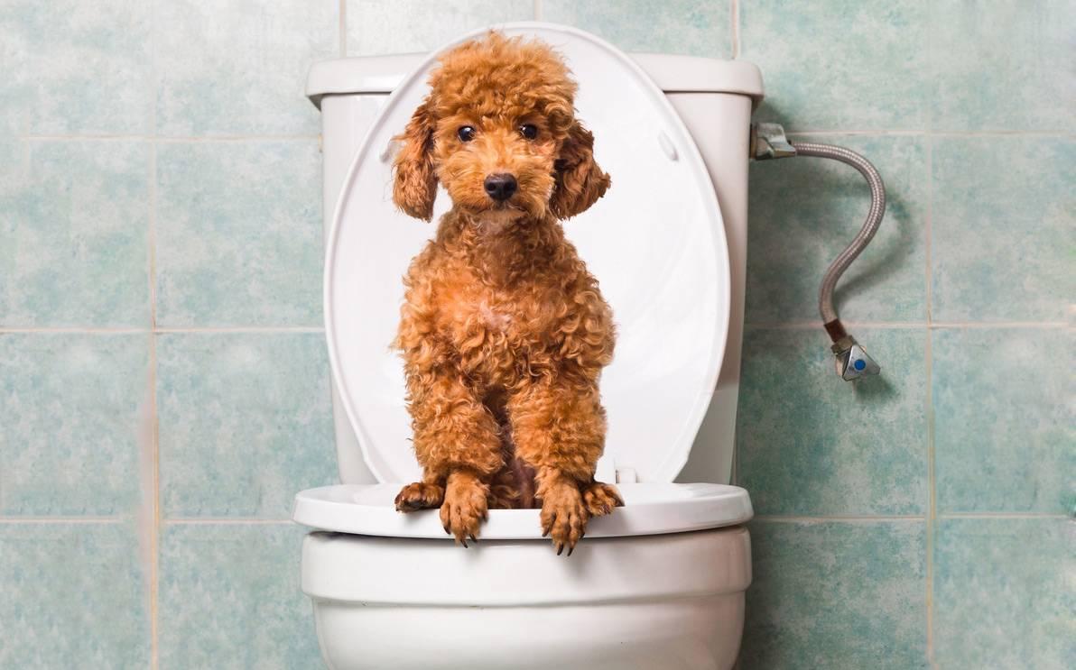 Запор у собаки: виды, симптомы, причины, лечение