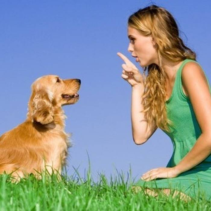Общий курс дрессировки собак: испытания, нормативы окд, описания.