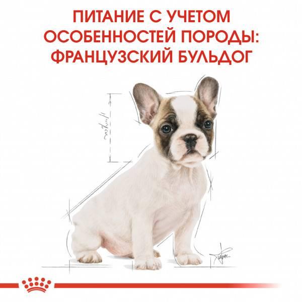 Как правильно ухаживать и содержать щенков и взрослых французских бульдогов