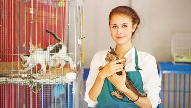 7 правил поведения адекватной и здоровой кошки