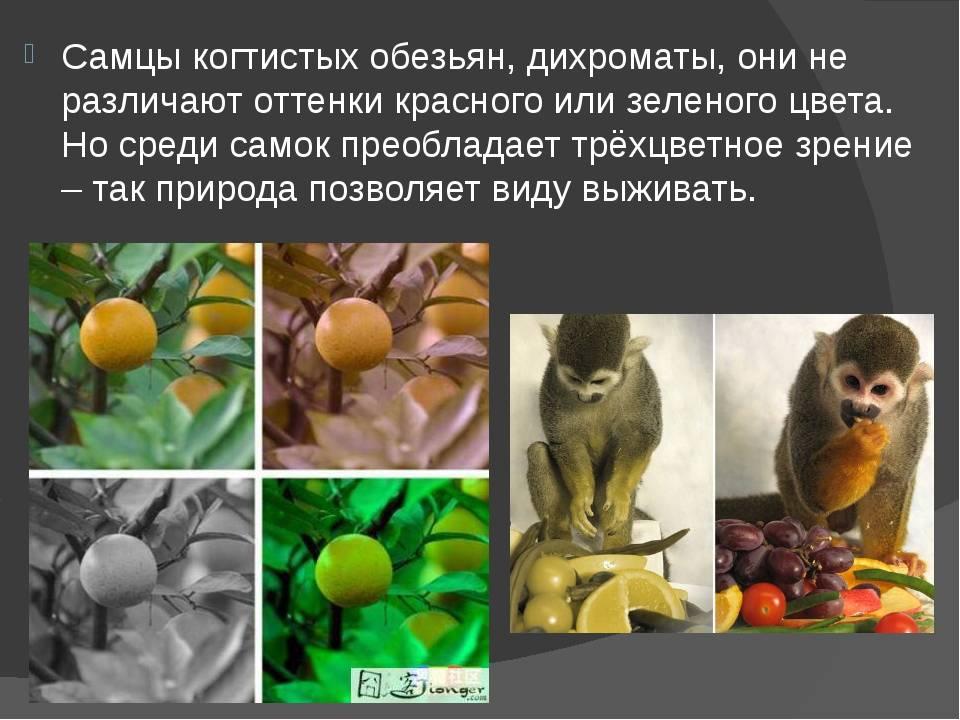 Как видят кошки наш мир, описание особенностей зрения, картинки, видео