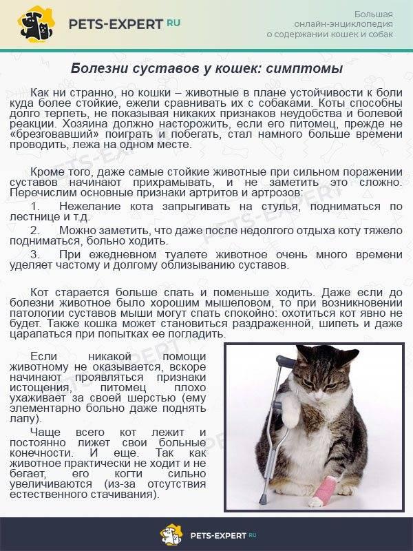Атаксия у кошек лечение препараты - муркин дом