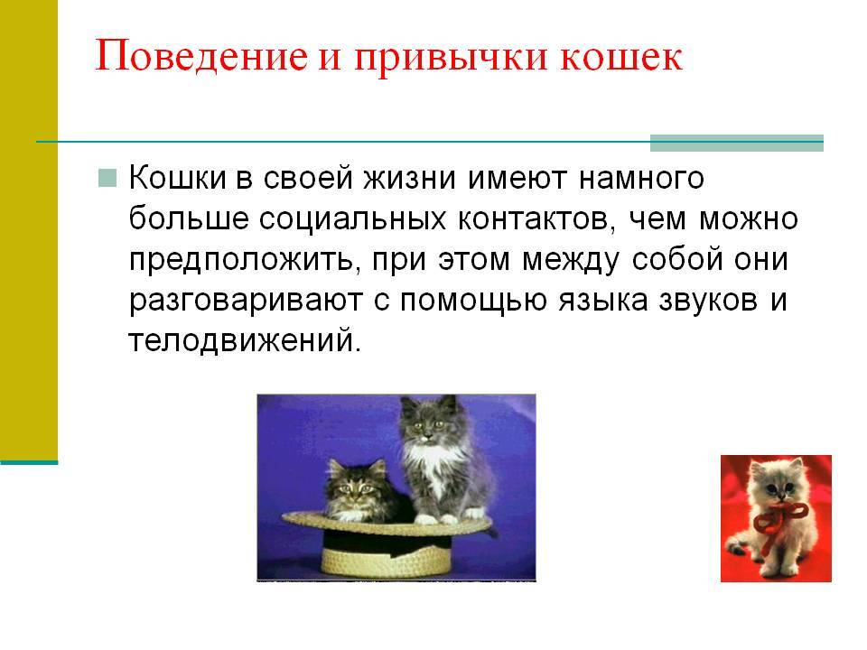 Домашние кошки: поведение и физиологические особенности