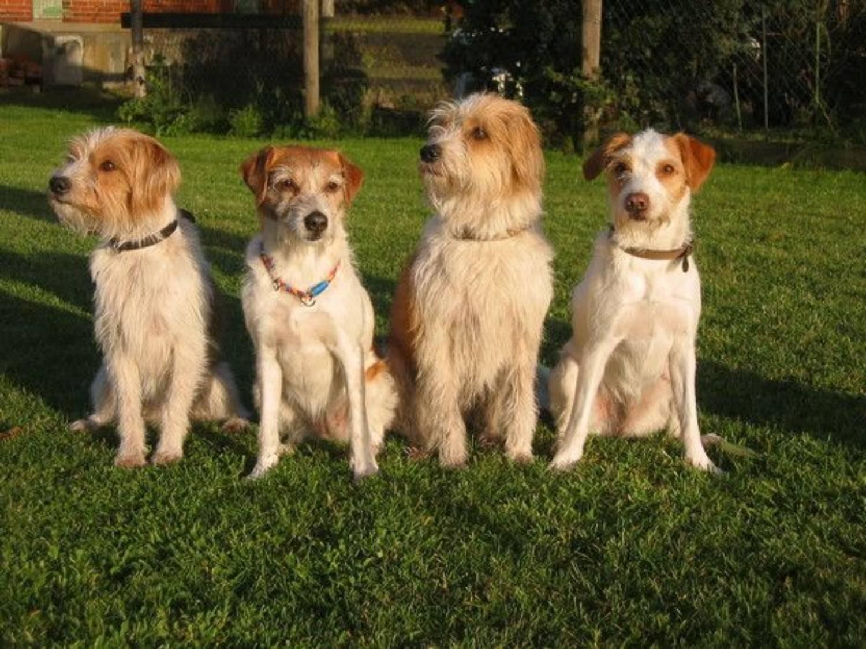 Энтлебухер зенненхунд: описание породы, цены, список питомников, отзывы владельцев на черты характера швейцарской собаки, фото и видео щенков и взрослых кобелей и сук