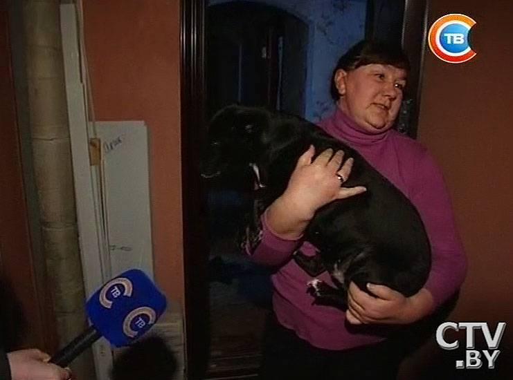 Лает собака у соседей: что делать