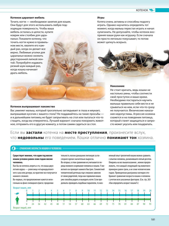 Как узнать возраст найденного или купленного котенка