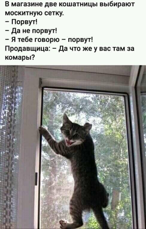Смешные истории про кошек и котов