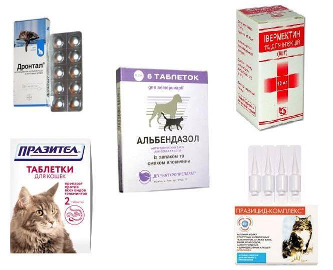 Отравление у кошки — симптомы   ветмед