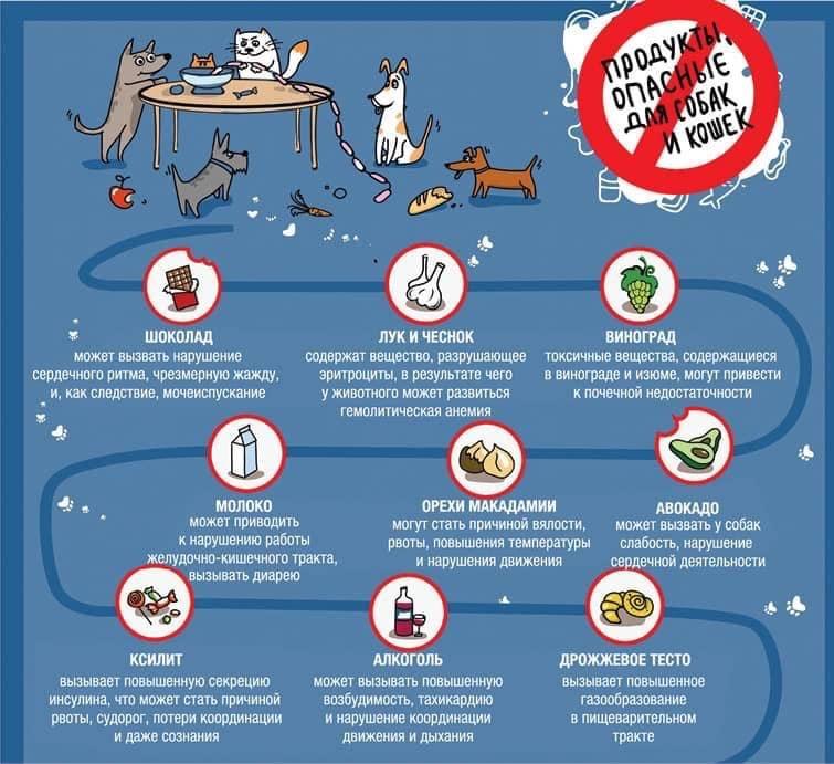 Молоко в рационе собаки — вред или польза?
