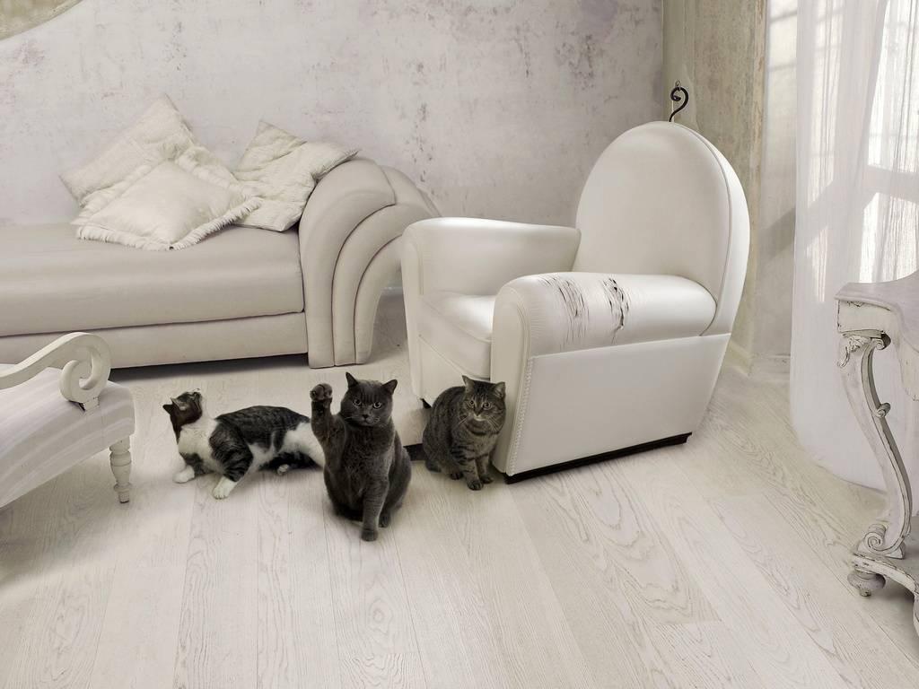 Кот или кошка: кого выбрать в качестве друга