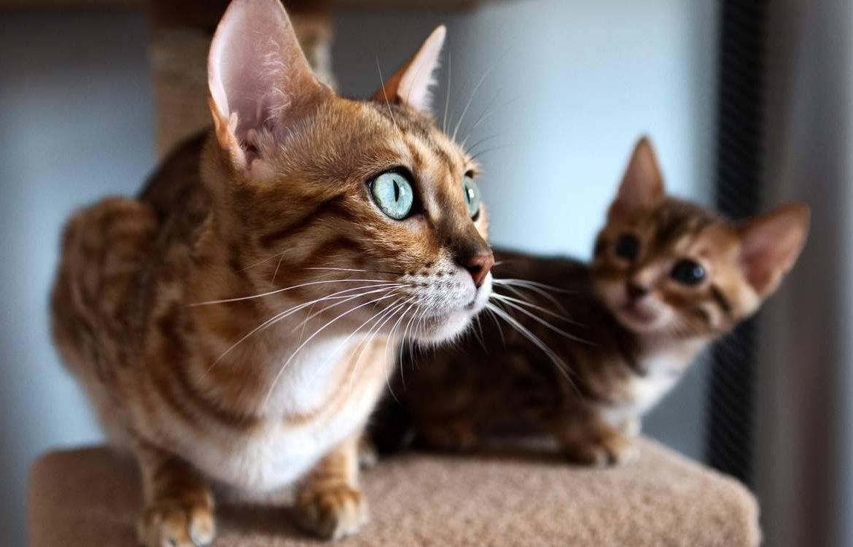 Самые красивые кошки: рейтинг и описание пород