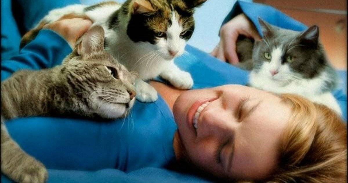 Почему нельзя целовать котов: чем это опасно?