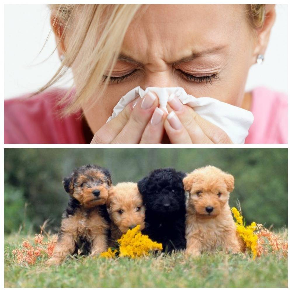 Животные / астма и аллергия