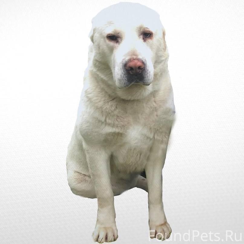 Клички для маленьких собак: прикольные и красивые имена, которыми можно назвать щенков мелких пород