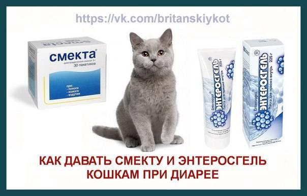 Можно ли применять энтеросгель для кошек