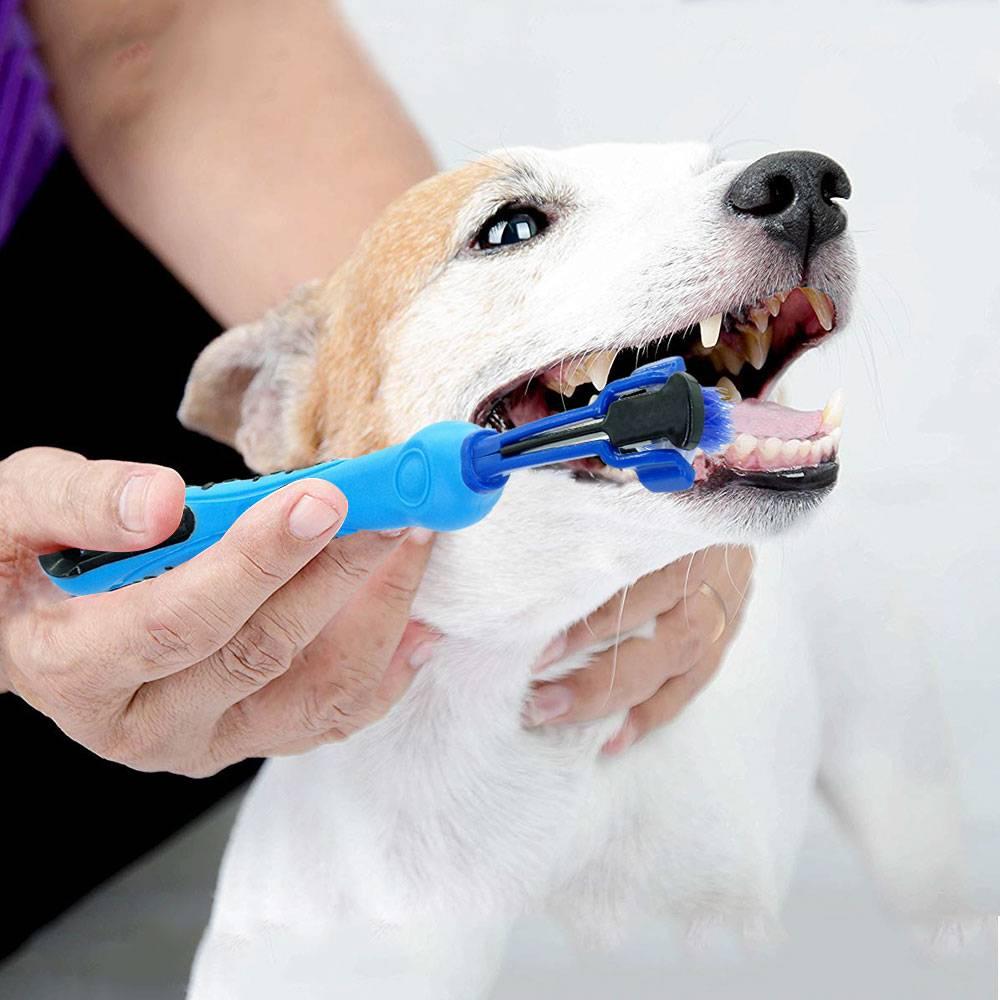 Зубной камень у собак: почему возникает и как от него избавиться?